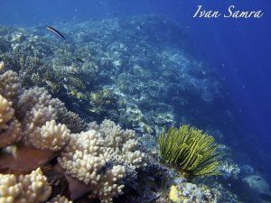 Timor leste reef
